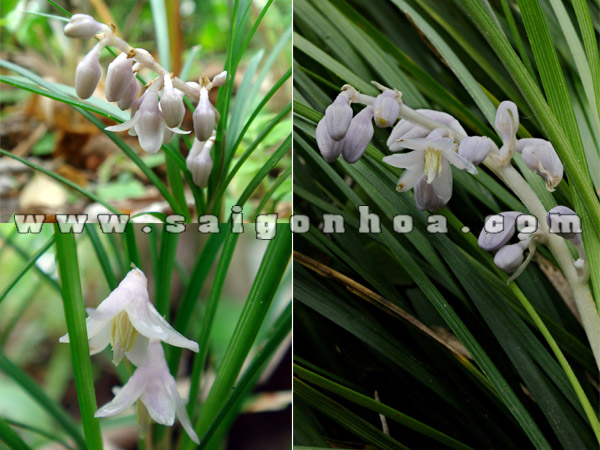 hoa cay cao cang xanh