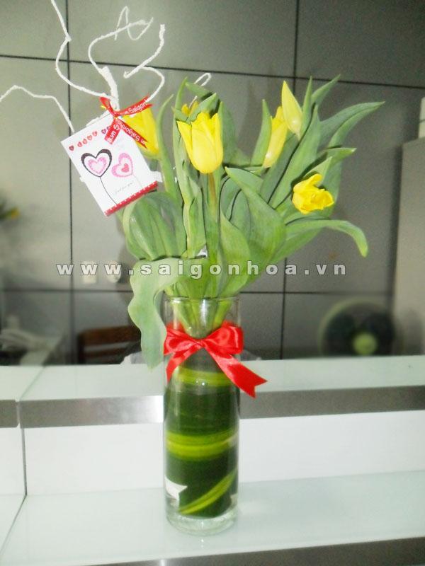 Hoa tulip 2