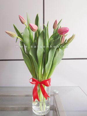 Hoa tulip mau hong
