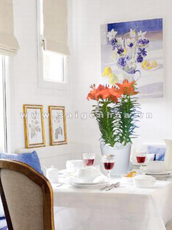 chau hoa lily mau cam