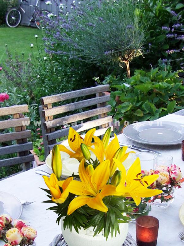 chau hoa lily mau vang 1