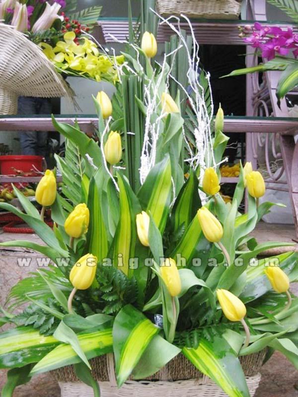 gio hoa Tulip vang