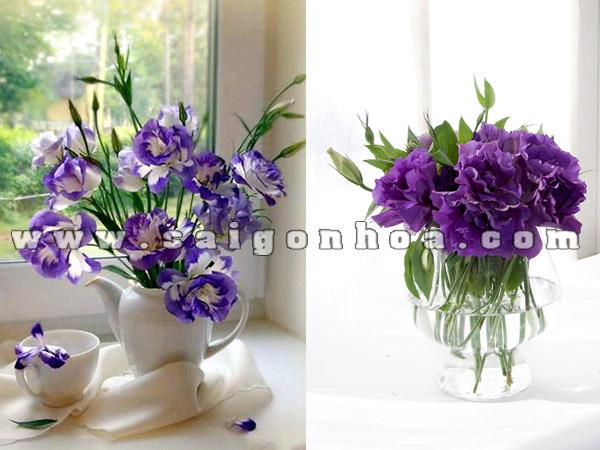 hoa cat tuong cam binh