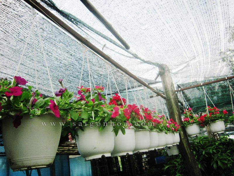 hoa da uyen thao 2