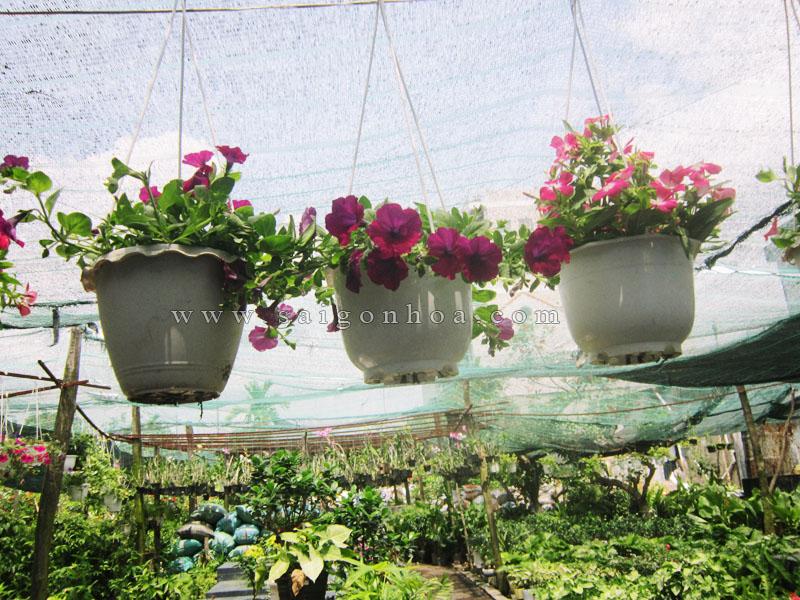 hoa da uyen thao
