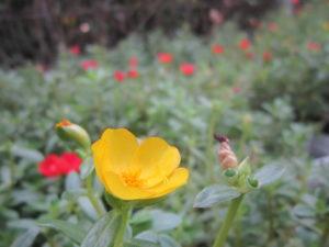 hoa muoi gio sam (2)
