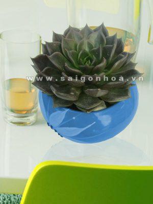 hoa sen da (3)