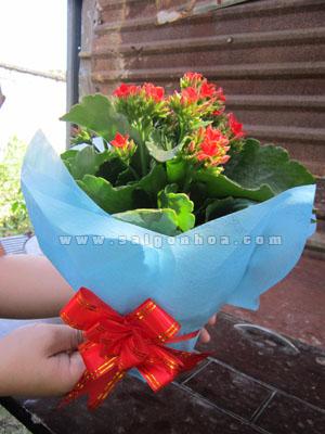 hoa song doi don qua tang
