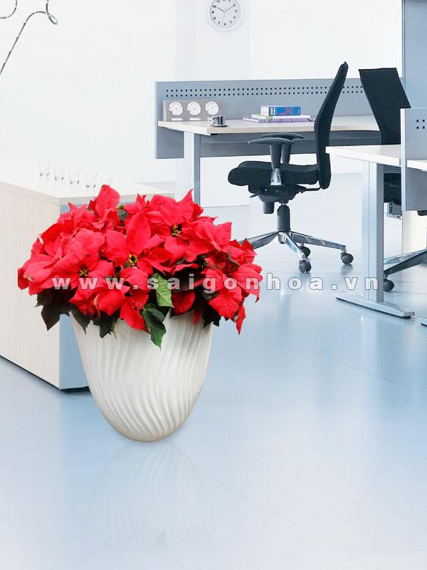 hoa trang nguyen (35)