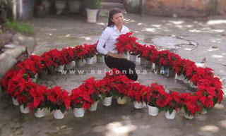 hoa trang nguyen (4)