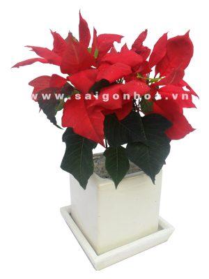 hoa trang nguyen (41)