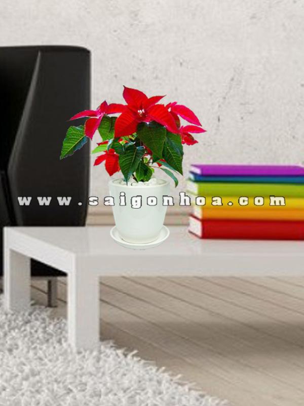 hoa trang nguyen de ban