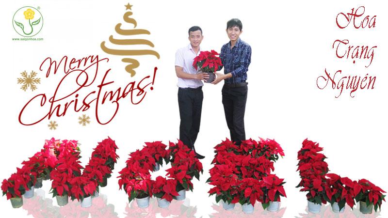 hoa trang nguyen giang sinh 5