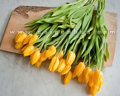 hoa tulip mau vang co cu