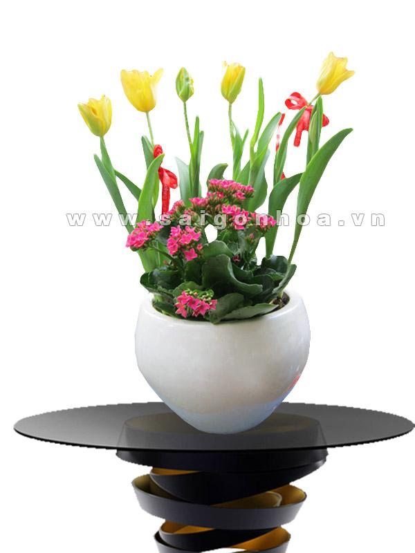hoa tulip va hoa song doi