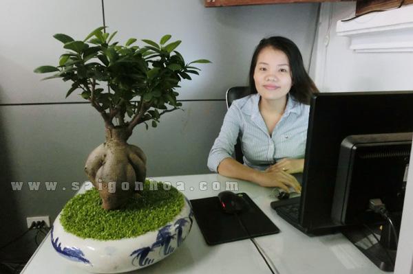 bonsai de ban