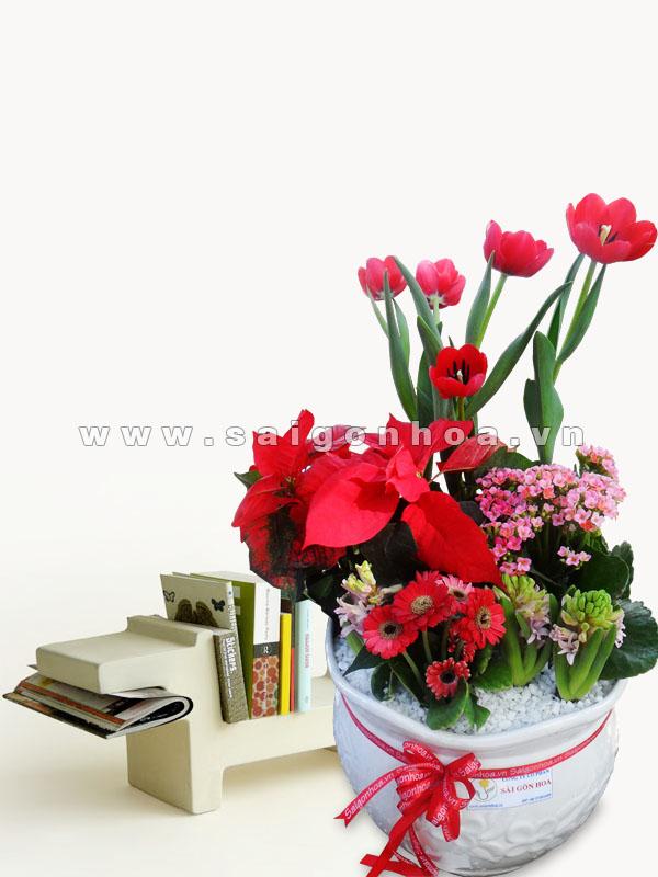 tieu canh hoa tulip