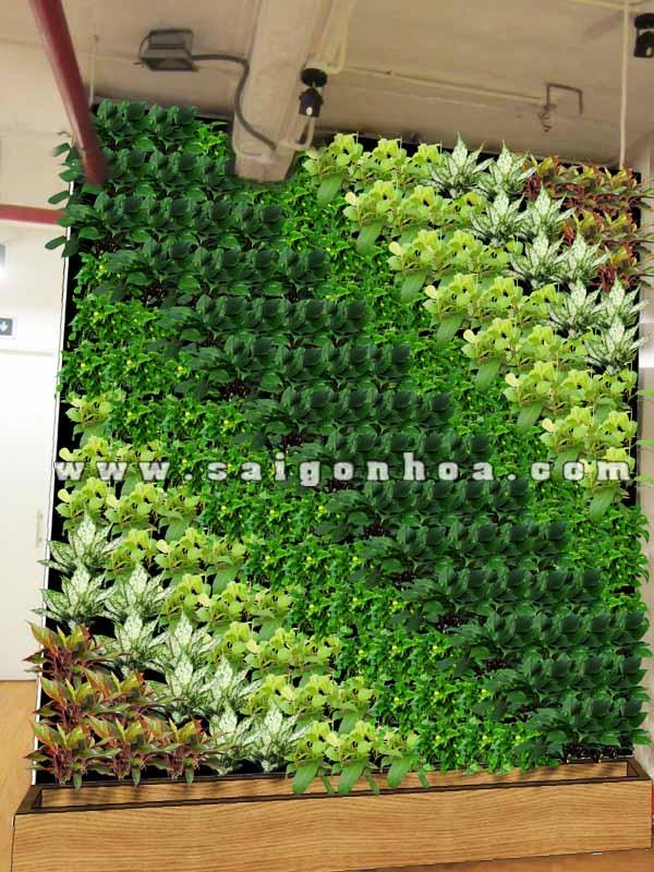cây lựa chọn trồng cho tường cây