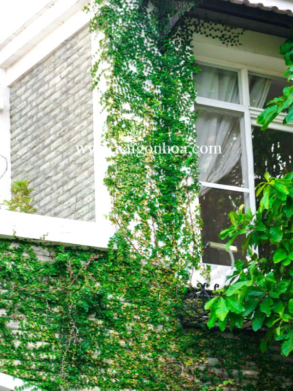 Thằn lằn bám tường với nhà theo phong cách phương tây