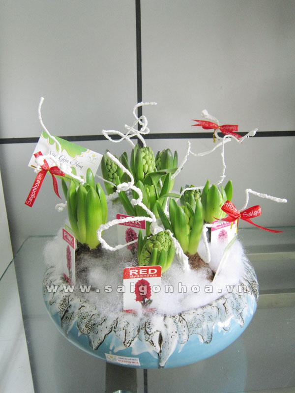 hoa da lan huong 6