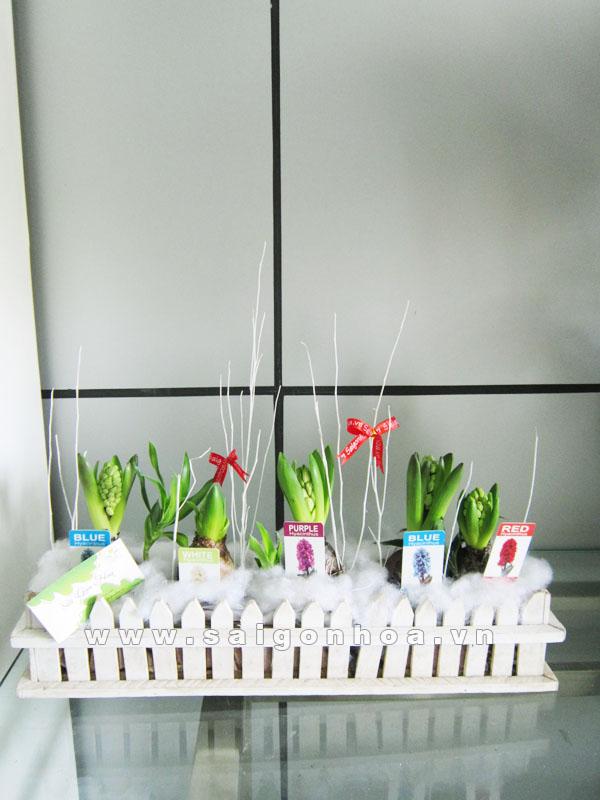 hoa da lan huong 7