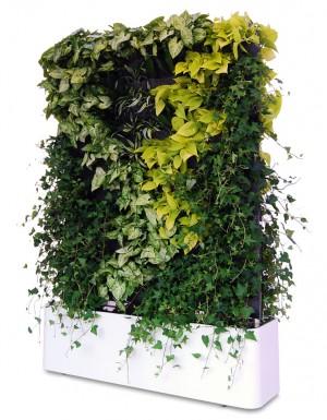 Tường cây di động phối hợp các loại trầu bà và dây leo thường xuân