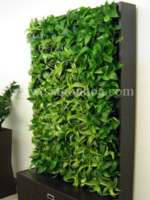 Tường cây di động trang trí nội thất