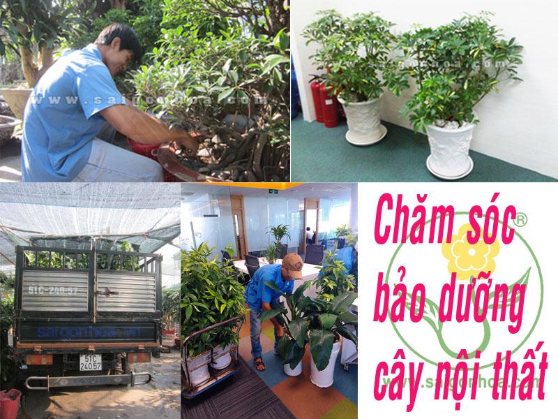 cham soc bao duong cay noi that