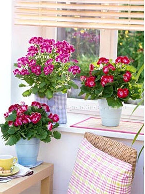 chau hoa phong lu trang tri cua so