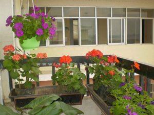 hoa phong lu trang tri ban cong