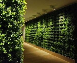 Tường cây nội thất văn phòng