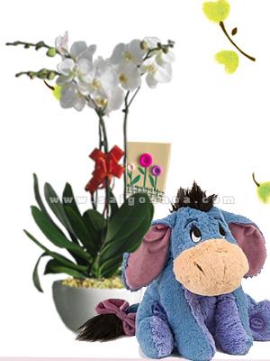 chau hoa lan ho diep trang 3 canh