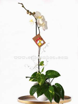 chau su lan ho diep trang 1 canh hoa