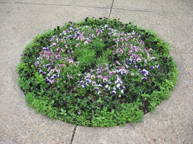 hoa cho patio