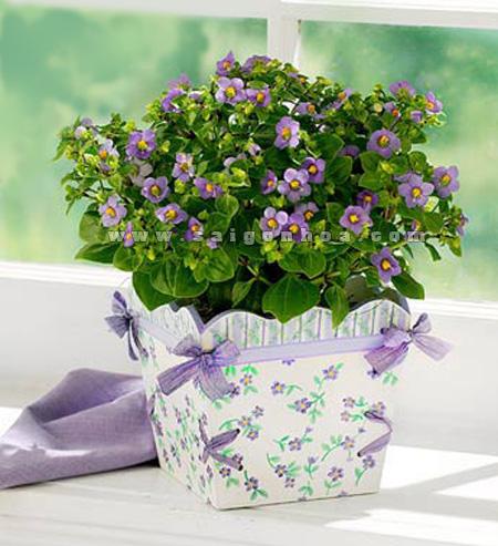 hoa-violet-4