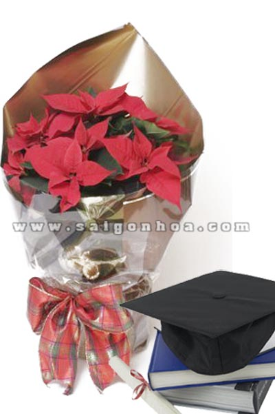 hoa trang nguyen chuc mung 2