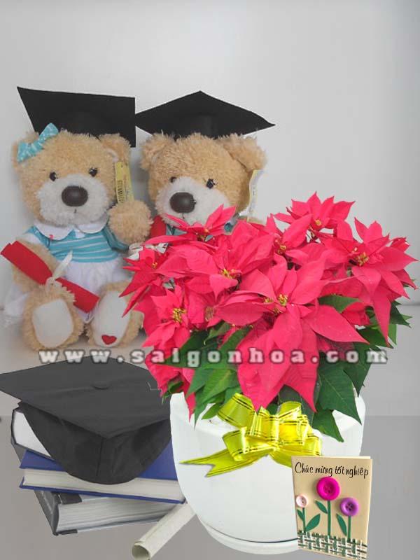 hoa trang nguyen chuc mung