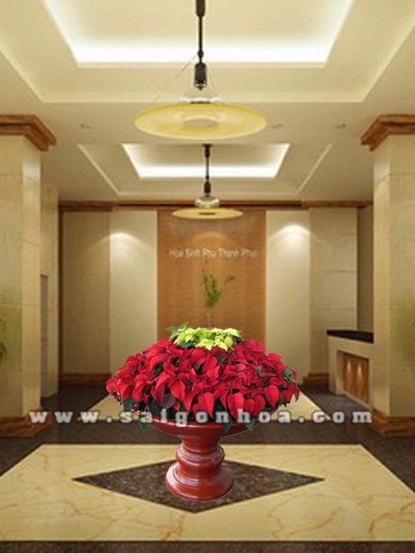 hoa trang nguyen de sanh 6