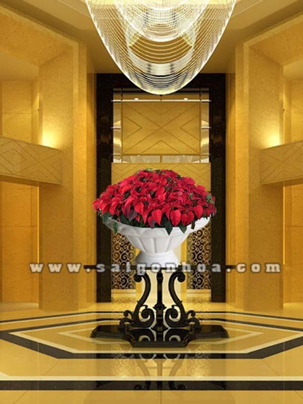 hoa trang nguyen de sanh