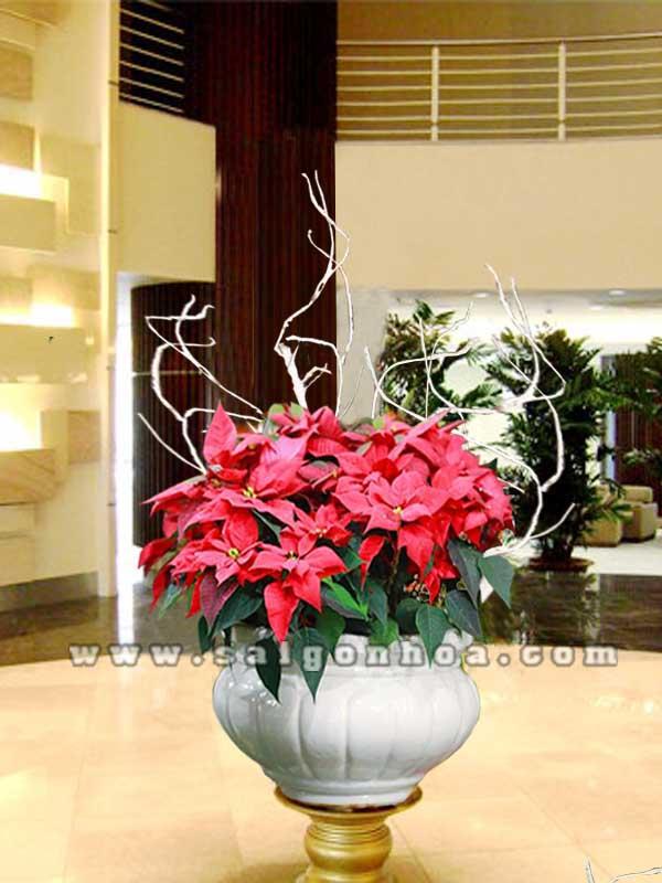 hoa trang nguyen tien sanh 4
