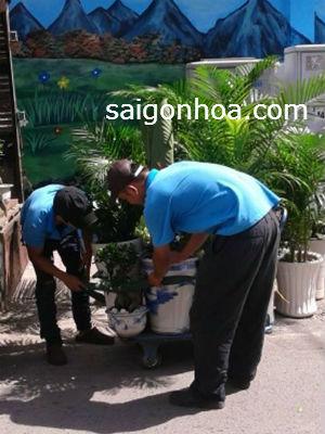 mang cay canh cho thue
