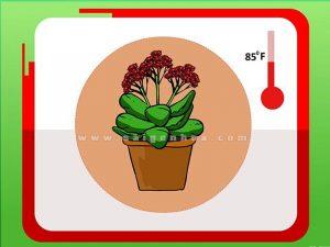 nhiet do ly tuong cho hoa song doi