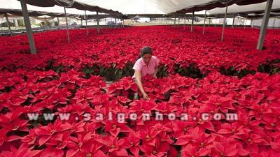 vuon hoa trang nguyen 2