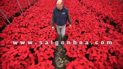 vuon hoa trang nguyen 99