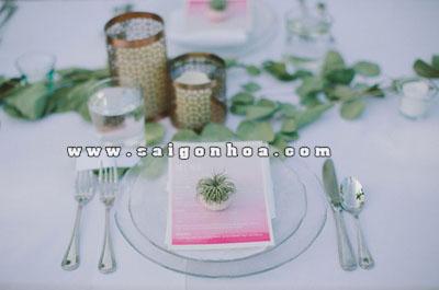 tillandsia for wedding