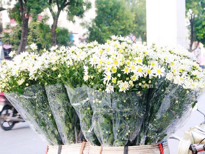 bo hoa cuc hoa mi