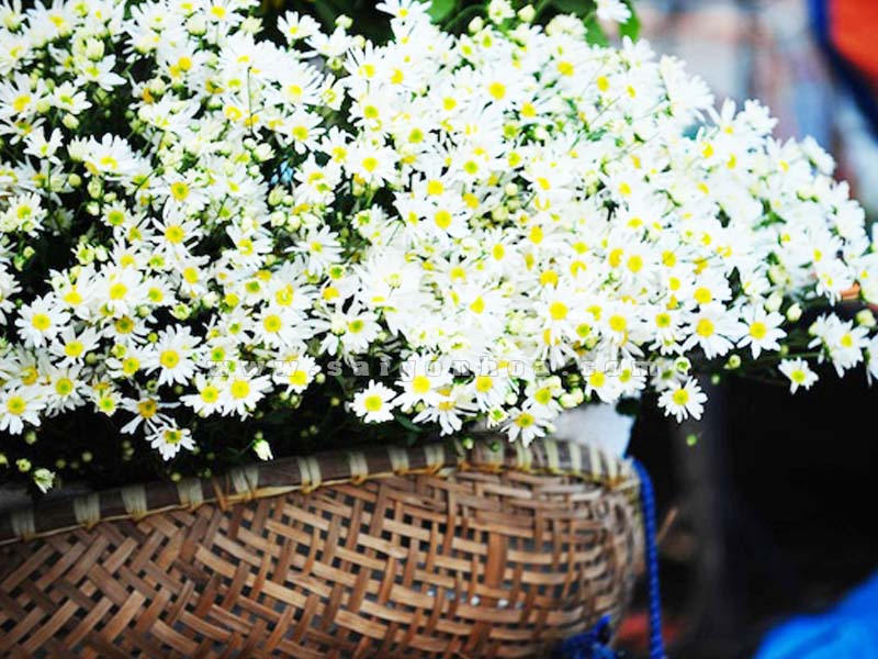 thung hoa cuc hoa mi