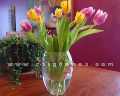 binh hoa tulip 9