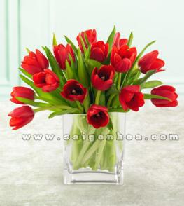 binh hoa tulip mau do 13