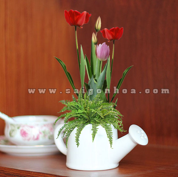 binh hoa tulip sang tao